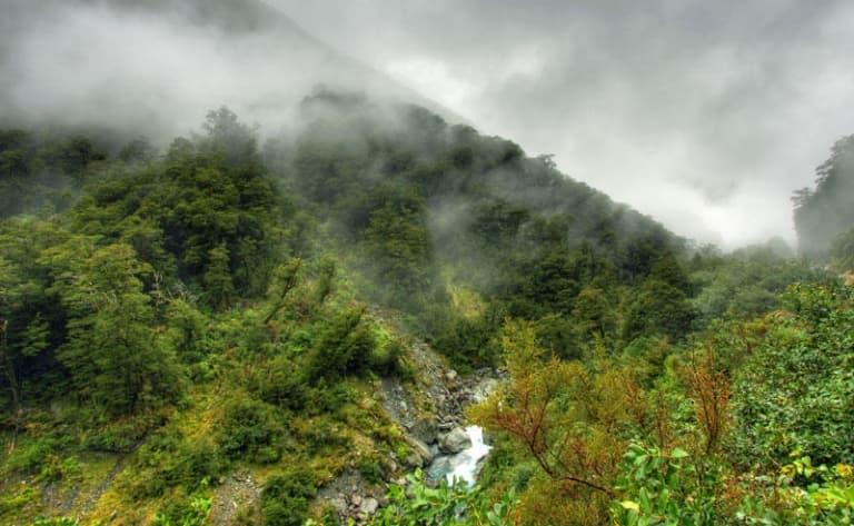 Dans le parc du Kinabalu