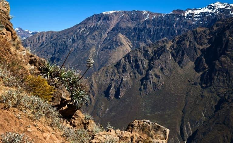 Vol du condor et Canyon de Colca