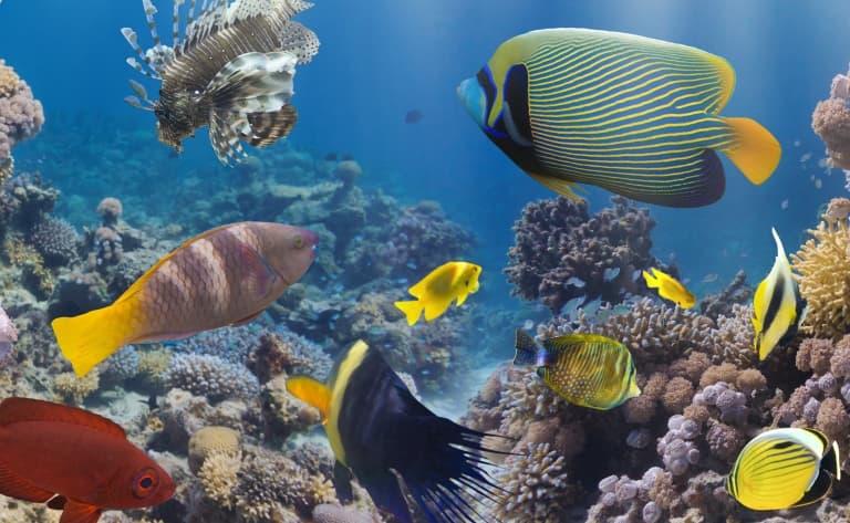 Magnificence des fonds marins
