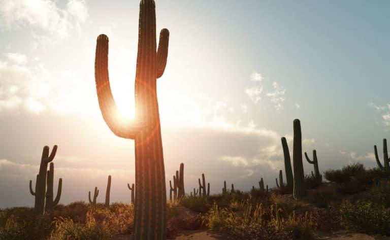 Apache Trail: la route des cactus