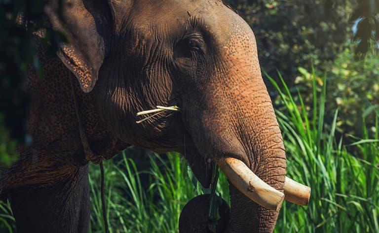 Les éléphants de Mondulkiri