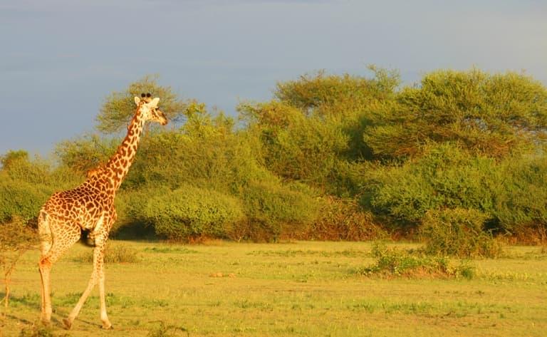 Arrivée au Kenya et  découverte  des paysages splendides de Laikipia
