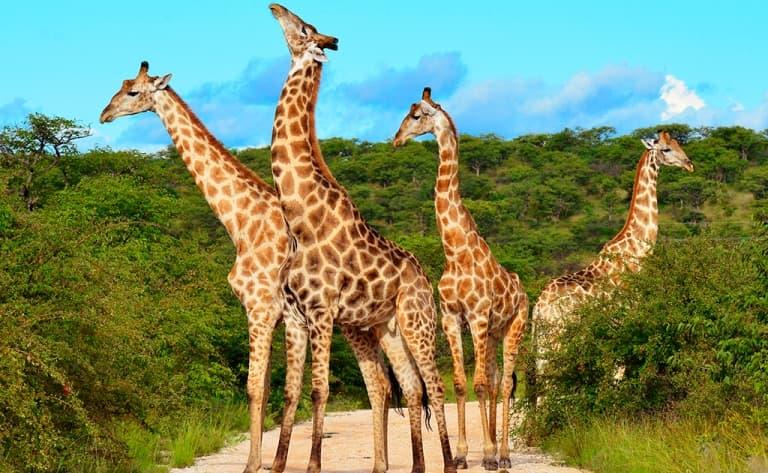 Deuxième journée de safari à Amboseli