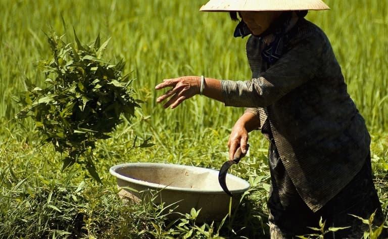 Atelier de sculpture sur fruits et légumes au cœur des rizières