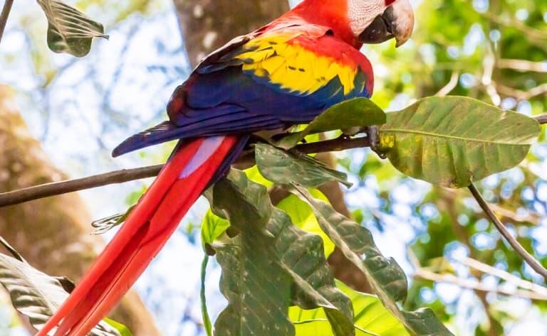 Toute la faune du Costa Rica !
