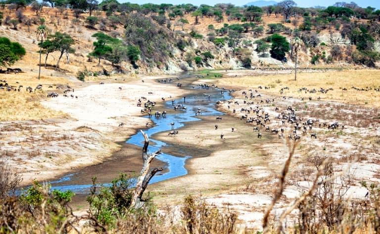 Au bord de la rivière Tarangire