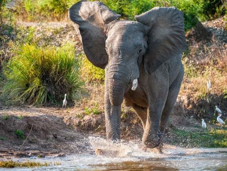Parc de Queen Elizabeth : safari et paysages somptueux