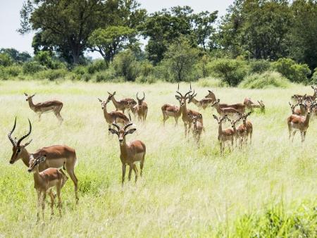 Safari et brunch au champagne dans la brousse