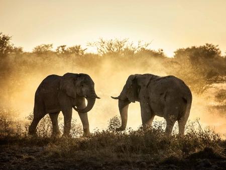 Amboseli, joyau du Kenya