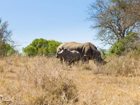 Océan Indien et safari « Big 5 »