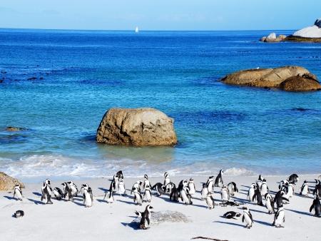 Au cœur de la Péninsule du Cap de Bonne Espérance