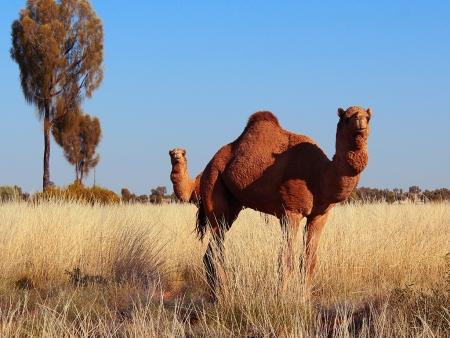 Il était une fois…Alice Springs