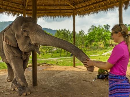A la rencontre des éléphants