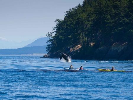 Rencontre avec les baleines !