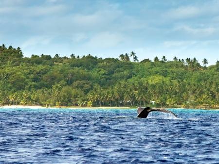 Dauphins et baleines à bosse !