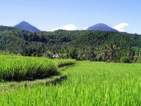A la découverte du Bali authentique…