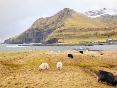 Découverte de Suðuroy avec un guide