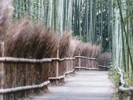 Les charmes des jardins et des temples de Kyoto