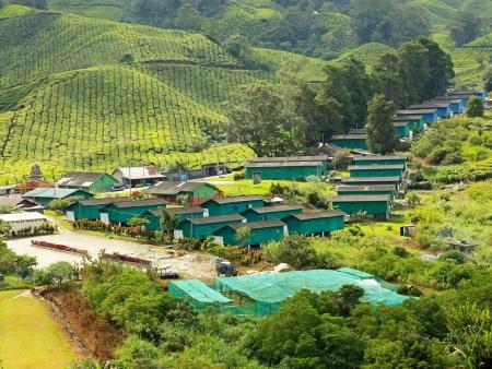 Les plantations de thé de Cameron Highlands