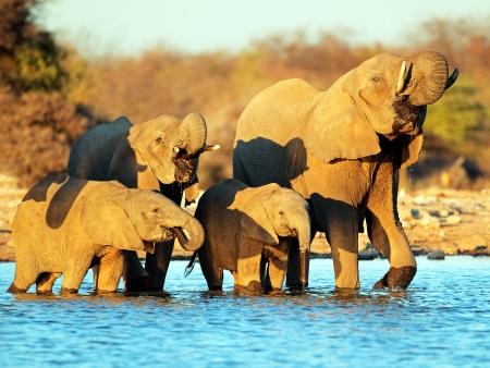 Journée de safari à Etosha