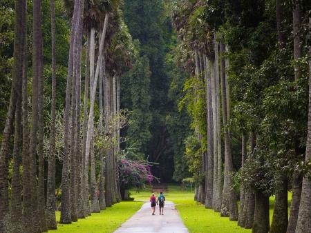Immersion dans les plantations de thé