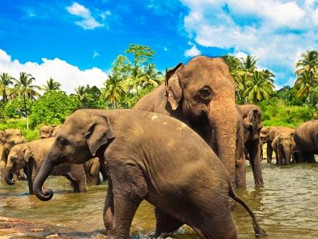 Les incontournables en famille aux alentours de Kandy
