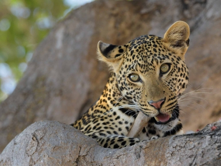 Safaris à Ruaha National Park
