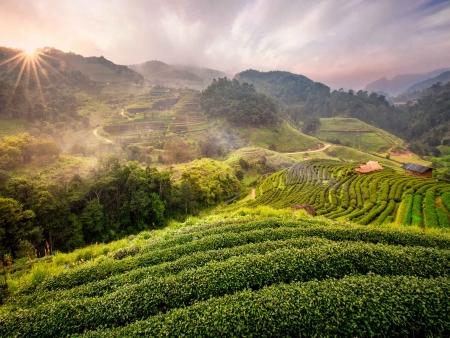 Sentiers verdoyants de la province de Chiang Mai