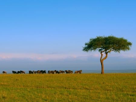 A la rencontre des éléphants rouges