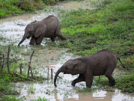 Trésors de la réserve de  Mana Pools