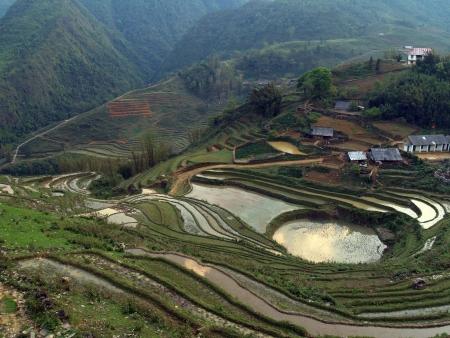 Randonnée au cœur des rizières en terrasse