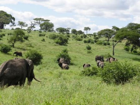 Parc de Manyara et balade en VTT
