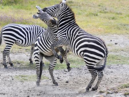 Safari au cœur du parc Tarangire
