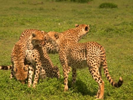 Randonnée masaï dans le Serengeti