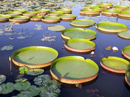Derniers instants dans le Pantanal et envol pour Paris