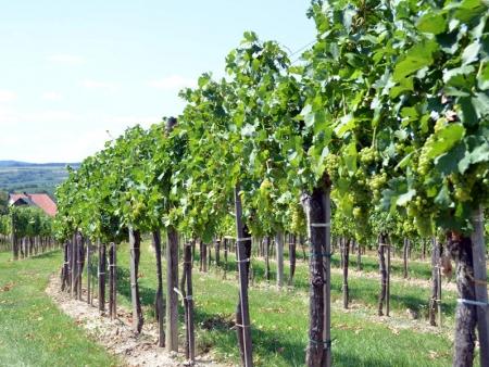 Vins et vignobles de la région de Santa Cruz