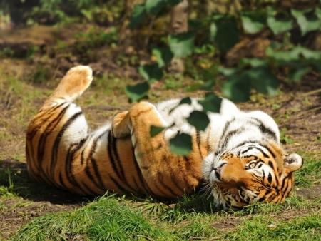 La réserve animalière de Sawai Madhopur