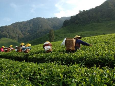 Mont Lawu, lac de Sarangan et plantations de thé