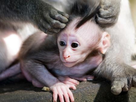 Forêt des singes jusqu'aux chutes d'eau au pied du Mont Rinjani
