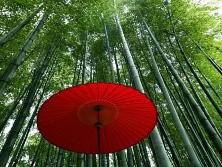 Kyoto à la folie