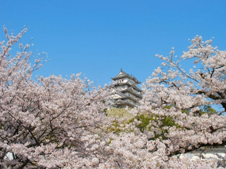 Forteresse Médievale d'Himeji