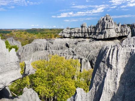 Trésors coralliens Massif de l'Ankarana