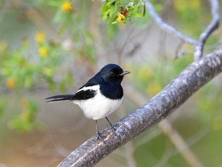 Au « Royaume des oiseaux »