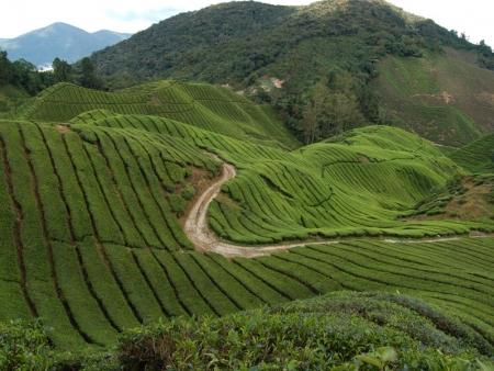 Between Penang and the Cameron Highlands