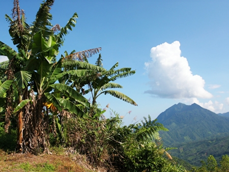 Where volcanoes and jungles meet