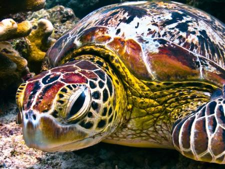 The turtles of Turtle Island