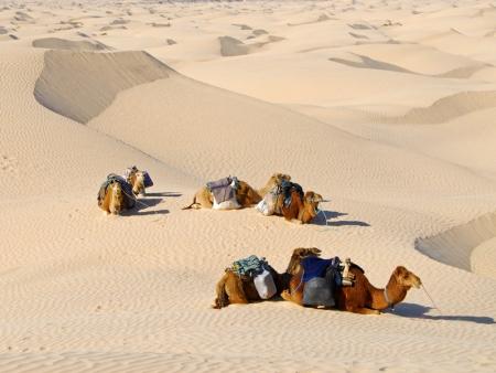 Une immersion dans le désert