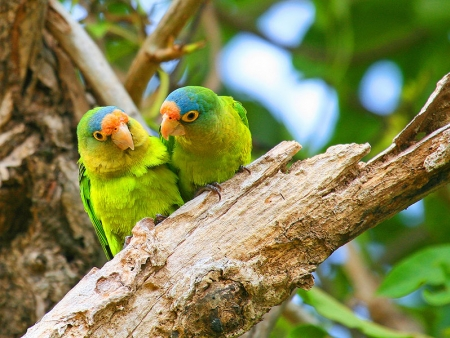 Biodiversité de la réserve de Monteverde