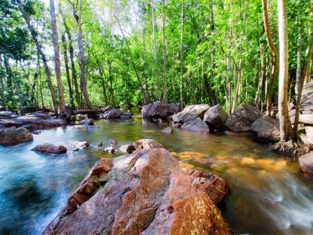 Aventures en forêt pluviale