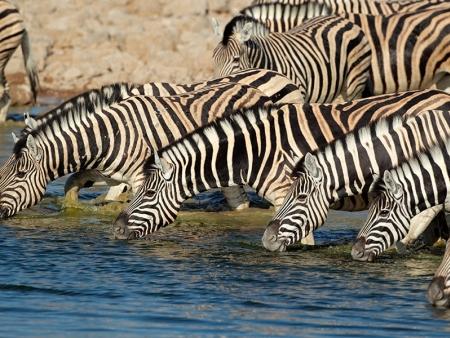 Safari dans le parc